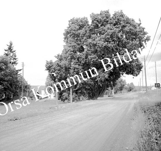 Okb_9509.jpg