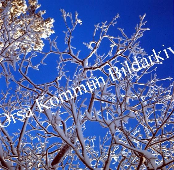 Okb_BN277.jpg