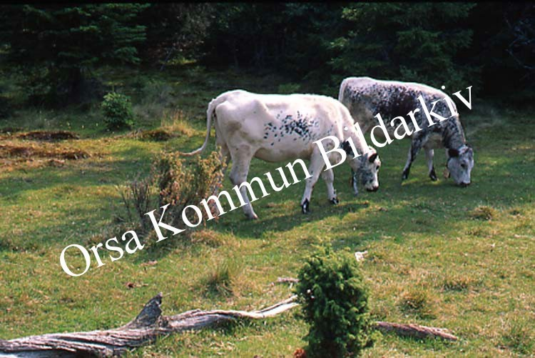 Okb_SEK156.jpg