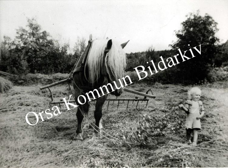 Okb_30662.jpg