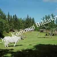 Okb_BN105.jpg