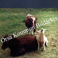 Okb_ST5.jpg