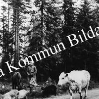 Okb_26924.jpg