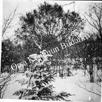 Okb_1884.jpg
