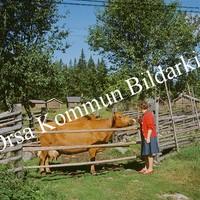 Okb_BN100.jpg
