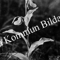 Okb_5379.jpg