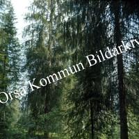 Okb_BN243.jpg