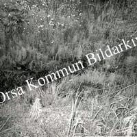 Okb_32092.jpg