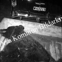 Okb_GG188.jpg