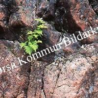 Okb_SEK79.jpg