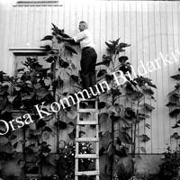 Okb_GG438.jpg