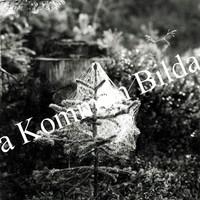 Okb_29957.jpg
