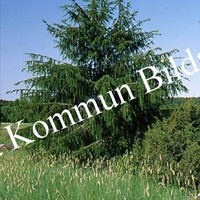 Okb_SEK135.jpg