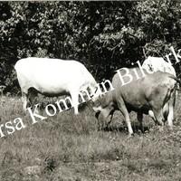 Okb_11328.jpg