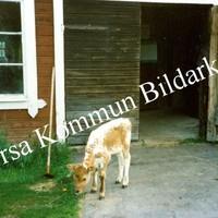 Okb_Damm13.jpg