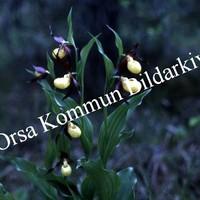 Okb_Hoff104.jpg