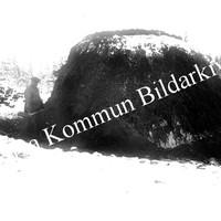 Okb_HL102.jpg