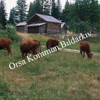 Okb_SEK94.jpg