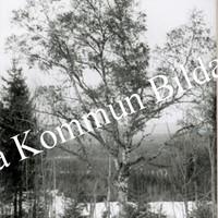 Okb_33655.jpg