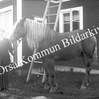 OkB_AN9.jpg