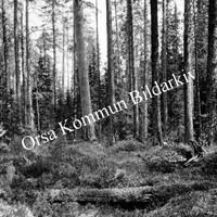 Okb_1801.jpg