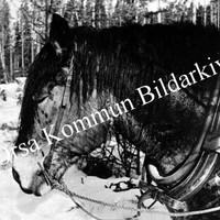 Okb_35557.jpg