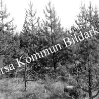 Okb_29599.jpg