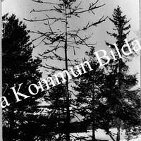 Okb_988.jpg