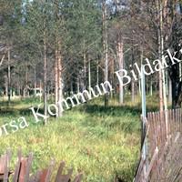 Okb_EBo124.jpg