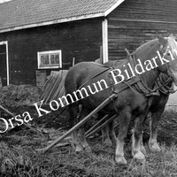 Okb_3303.jpg