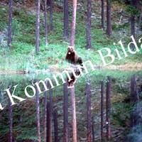Okb_RB14.jpg