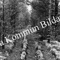 Okb_29922.jpg