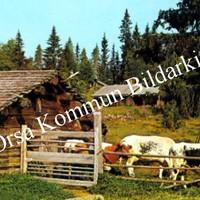 Okb_33630.jpg