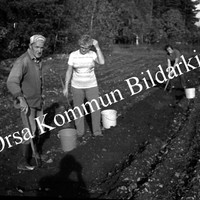 Okb_EBo31.jpg