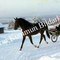 Okb_Hoff352.jpg