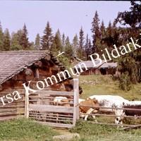 Okb_BN321.jpg