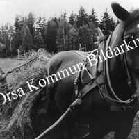 Okb_27219.jpg