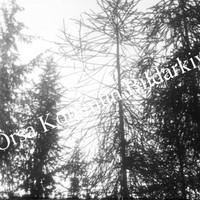 Okb_670.jpg