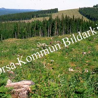 Okb_SEK140.jpg