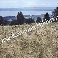 Okb_Hoff257.jpg