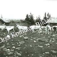 Okb_28445.jpg