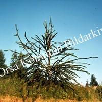 Okb_BN245.jpg