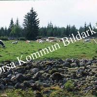 Okb_SEK111.jpg