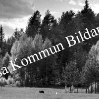 Okb_35990.jpg
