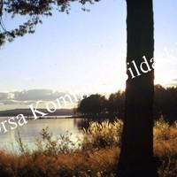 Okb_BN374.jpg