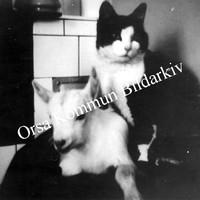 Okb_29096.jpg