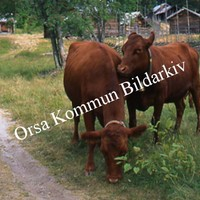 Okb_SEK99.jpg
