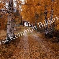 Okb_Has503.jpg