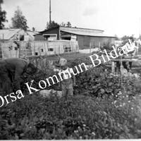 Okb_35111.jpg